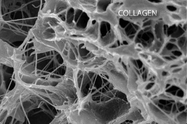 Collagen_copy_4